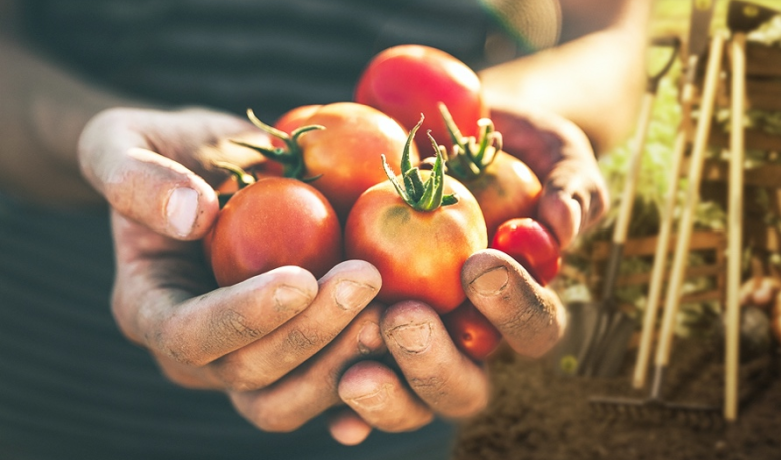 Want to have fresh foods and seasonings that are always fresh on your table? Then start making your own garden!